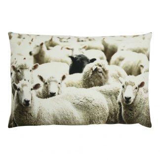 canvas kussen met kudde schapen en zwart schaap